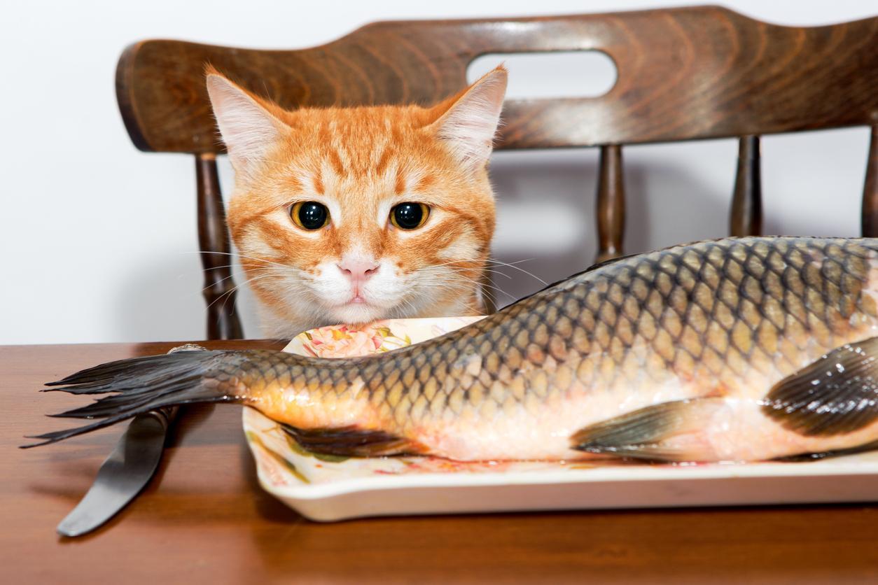 cibo gatto2